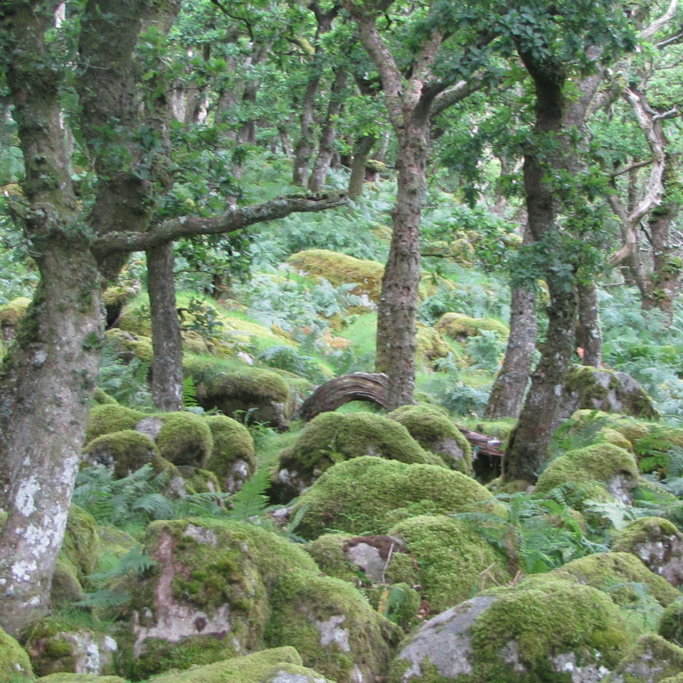 South Devon forest